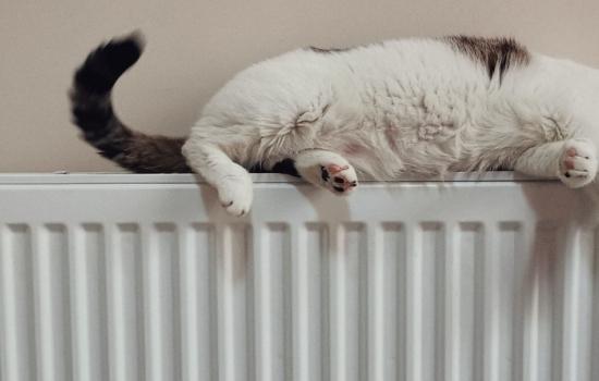 Cat sleeping on top of a radiator