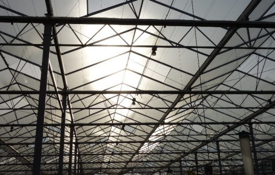 Sunlight through the roof of a glasshouse blog