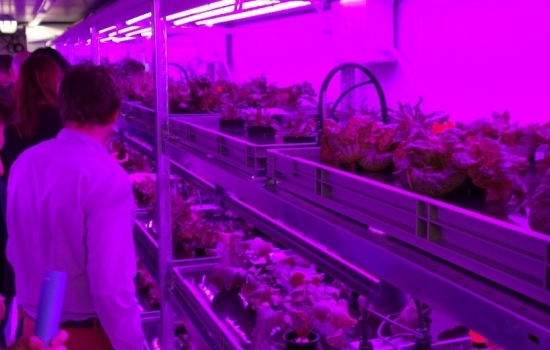 People looking at an example of vertical farming