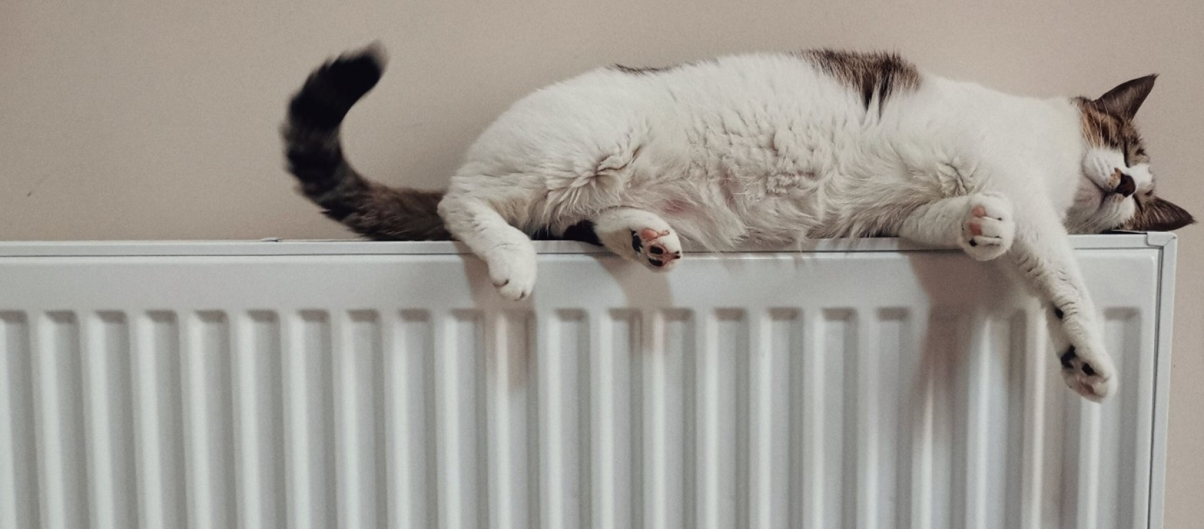 Cat sleeping on top of a radiator