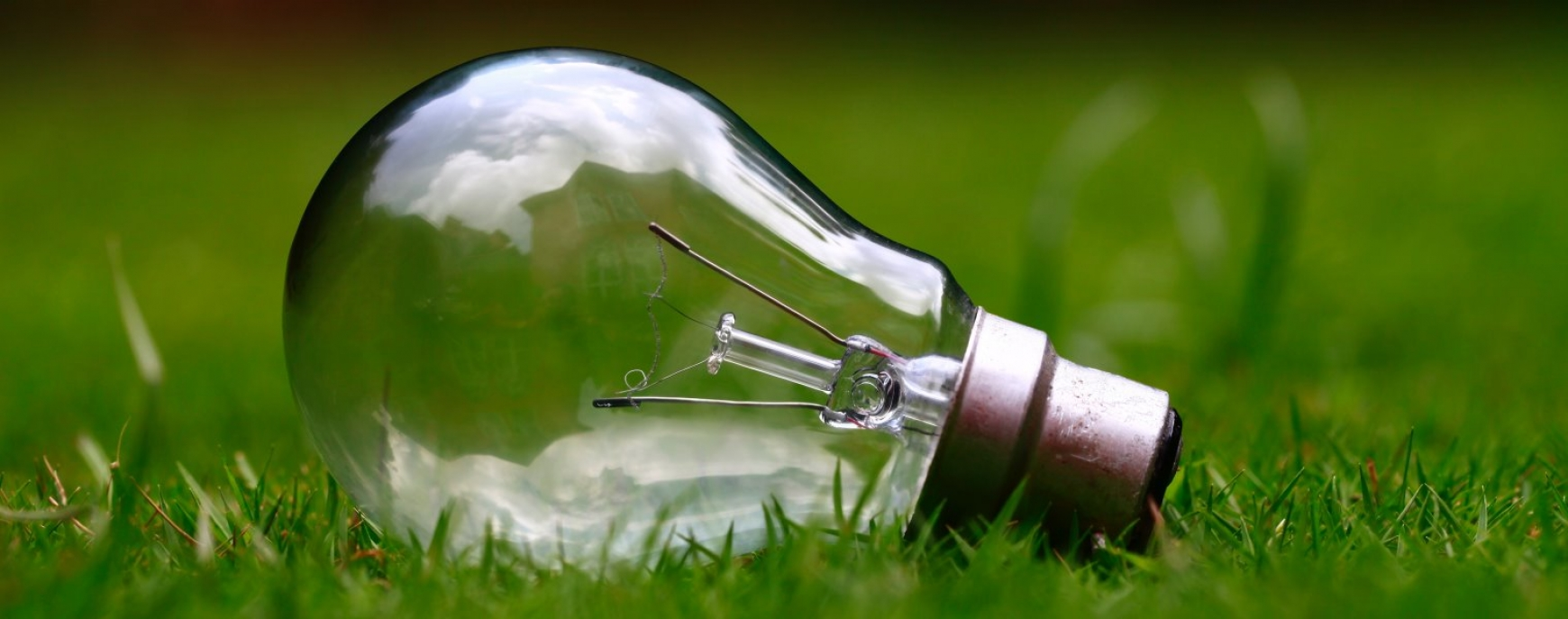 Lightbulb lying in the grass