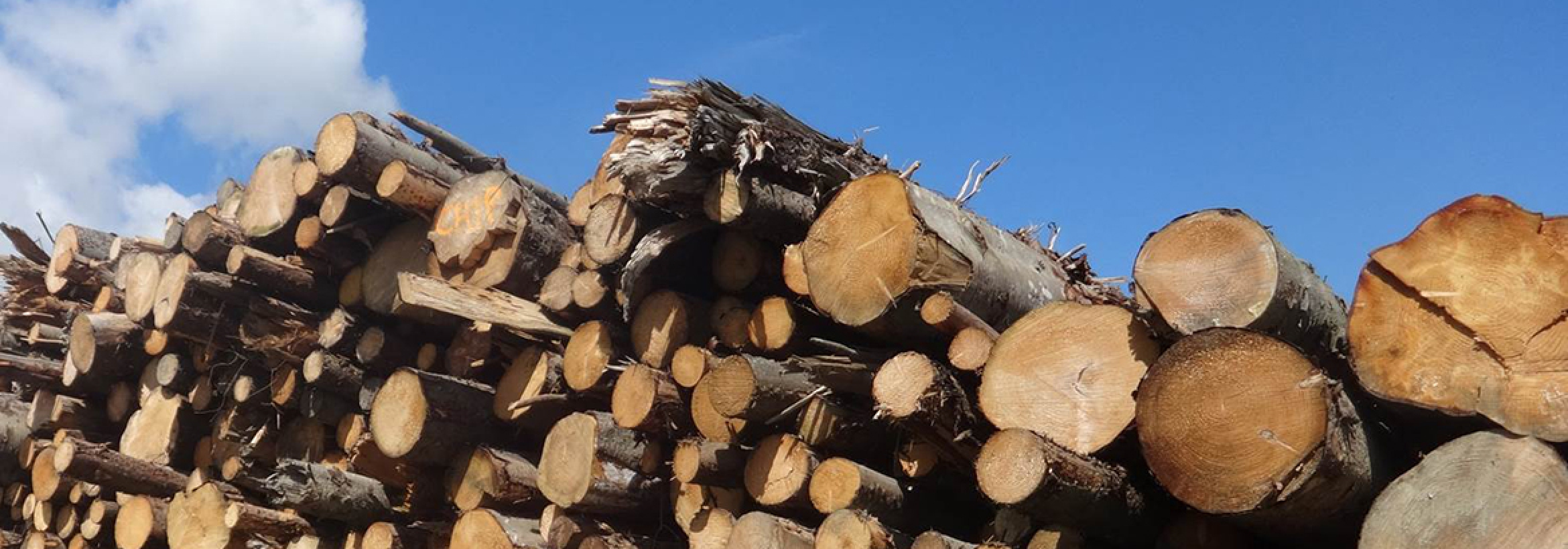 Large stack of felled trees representing  NFU Energy's sustainable fuel reporting service